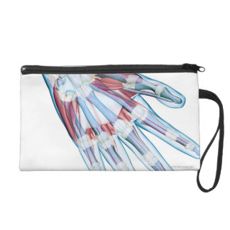 Ligaments in the Hand Wristlet Clutches