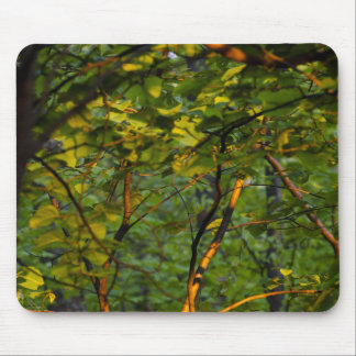 light-branches-leaves-2012-03-30 mouse pad