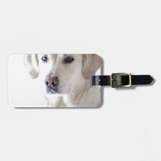 Light Golden Retriever Bag Tag