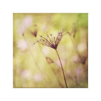 Light Green and Pink Queen Anne's Lace Zen Canvas Print