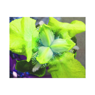 Light Green Iris Canvas Canvas Print