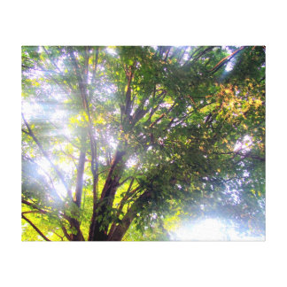 Light of Trees Stretched Canvas Print