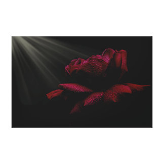 Light on the rose, wrapped canvas canvas print