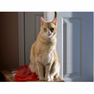 Light orange tabby standing photo sculpture