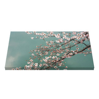Light pink cherry blossoms on turquois background stretched canvas print