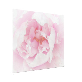 Light Pink Peony Flower Stretched Canvas Print