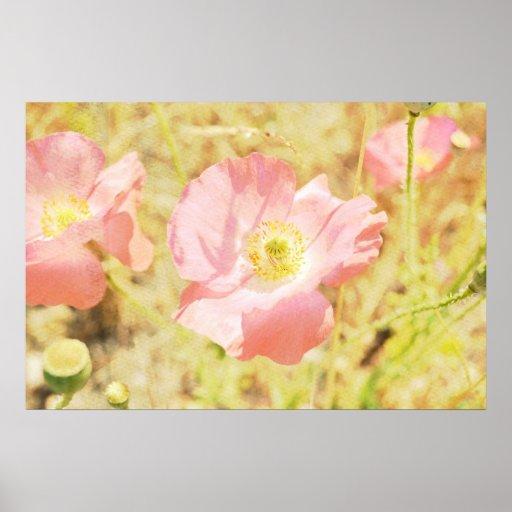 Light Poppies Poster