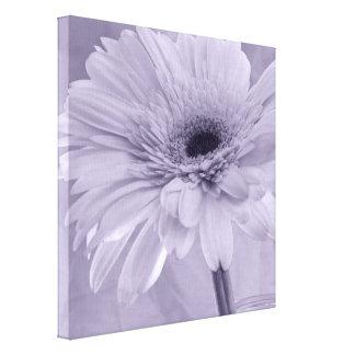 Light Purple Gerber Daisy Canvas Print