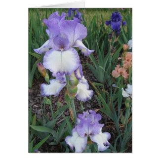 Light Purple Iris Note Card