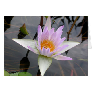 Light Purple Water Lily Greeting Card