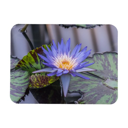 Light purple waterlily up close fridge magnet