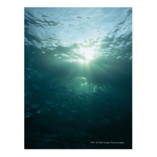 Light shining on coral reef and school of fish postcard