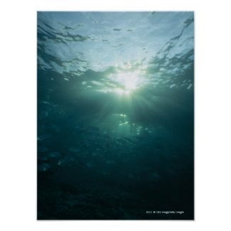 Light shining on coral reef and school of fish poster