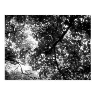 Light Through the Trees Postcard