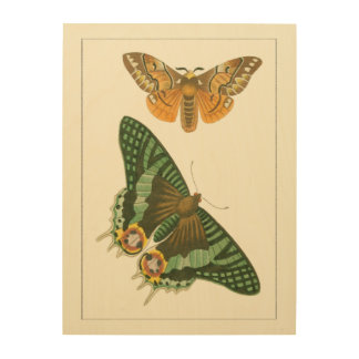 Lightly Bordered Butterfly Painting Wood Wall Art