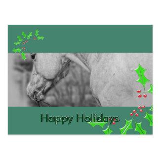 Lightly Dun Dapples (Christmas) Postcard