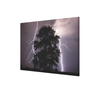 Lightning Strikes In The Sky Behind A Tree Canvas Print