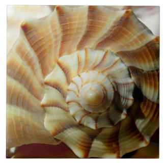 Lightning Whelk Square Ceramic Tile