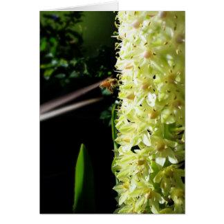 Like a Bee to Honey - Customizable Blank Card