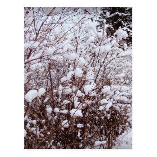 Like Cotton Postcard