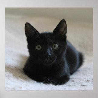 Lil Black Kitten Poster