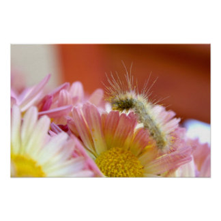 Lil' Caterpillar Poster