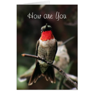 Lil Hummingbird Male greeting or notecard-customiz Card