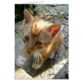 Lil' Red Kitten Card