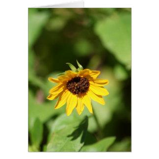 Lil' Sunflower card