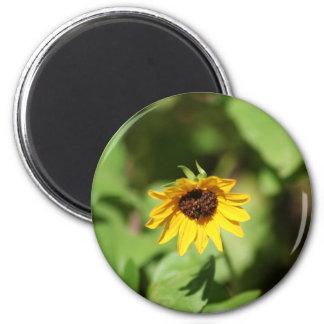 Lil' Sunflower magnet