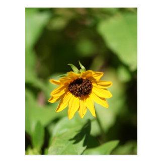 Lil' Sunflower postcard