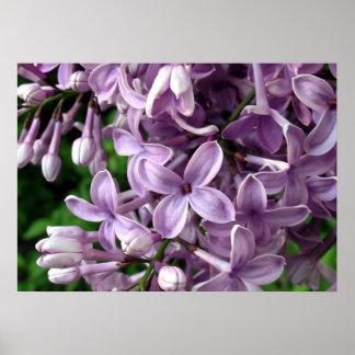Lilac blossom symbol Easter Spring Poster