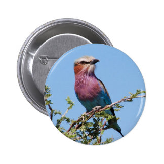 Lilac-breasted Roller 6 Cm Round Badge