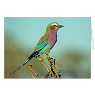 LILAC BREASTED ROLLER bird blank-inside card