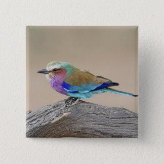 Lilac-breasted roller (Coracias caudata) 15 Cm Square Badge