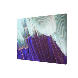 Lilac Breasted Roller Feather Abstract Canvas Print