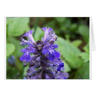 Lilac color guard card