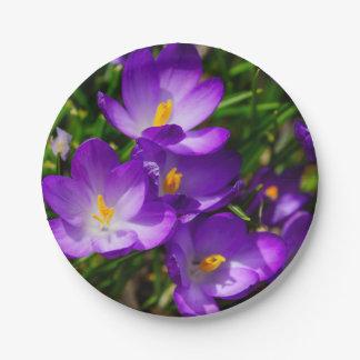Lilac Crocuses Paper Plate