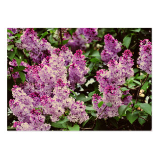 Lilac flowers business cards