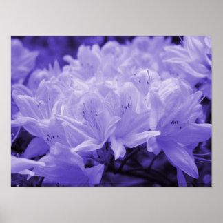 Lilac Lilies Print