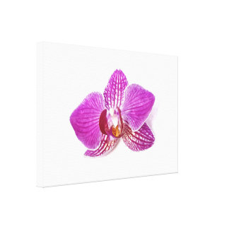 Lilac phalaenopsis floral fine art watercolor canvas print