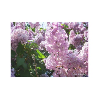 Lilac Photo Wall Art