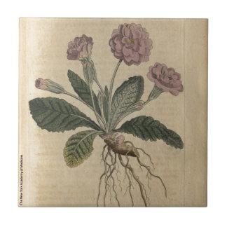 Lilac Primrose Ceramic Tile