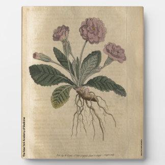 Lilac Primrose Plaque