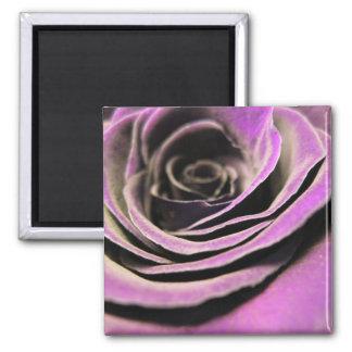 Lilac Rose Fridge Magnet