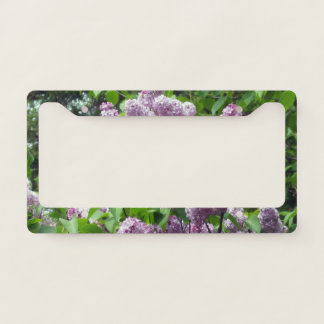 Lilac Shrub Licence Plate Frame