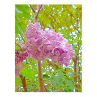 Lilac, the purple even number fragrance flower (it postcard