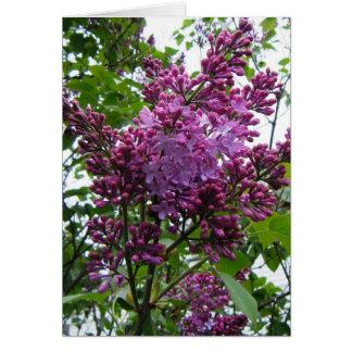 """""""Lilacs chez moi"""" Card"""
