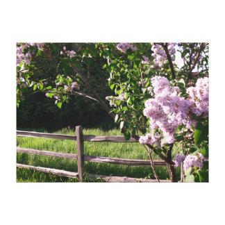 Lilacs Tress Canvas Print