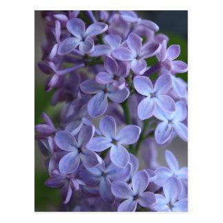 Lilas floral tree in blom postcard